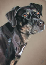 pastel portrait of a dog by purely pastels artist tracey rood