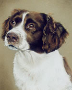 pastel portrait of a dog's head by purely pastels artist tracey rood