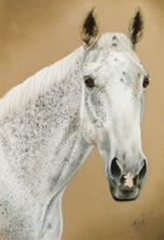pastel portrait of a horse by purely pastels artist tracey rood